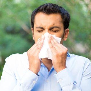 #bruxelles Encore des allergies?!?