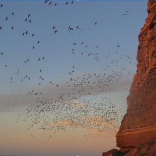La mayor colonia de loros del mundo   El atlas de la biodiversidad #2