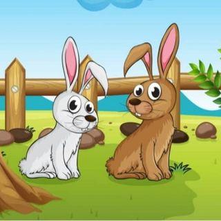 conejo en peligro