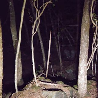 Unexplained and DISTURBING Forest Stories To Creep You Out! I Halloween