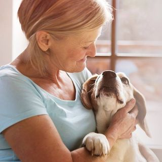 Hooper Law Office on Estate Planning for Pets