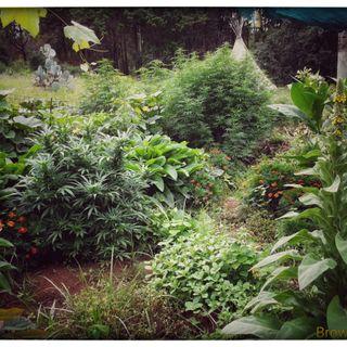 Psychedelic Radio - Digital Weed News