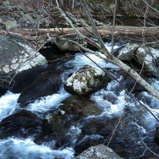 Pilgrim at Little Piney River: 26