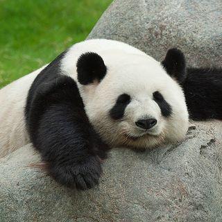 12-Pandalar