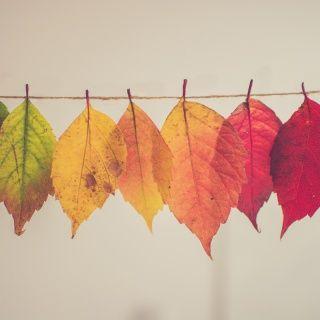 266. Mini-Défi de la semaine : l'automne !