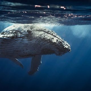 Come una balena può cambiarti la vita