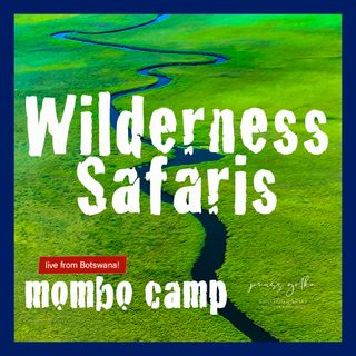 Wilderness Safaris Mombo Camp Live Interview!
