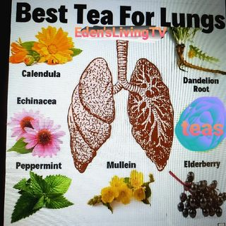 Best TEAS for LUNG HEALTH
