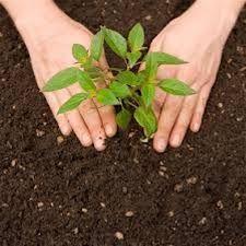 Programa de reforestación Siembra Vida