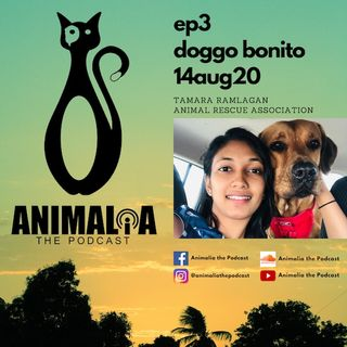 ANIMALIA 03 - Doggo Bonito - 14Aug20