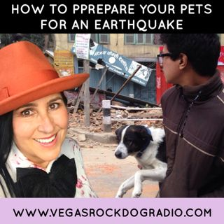 How To Prepare Your Pets For An Earthquake