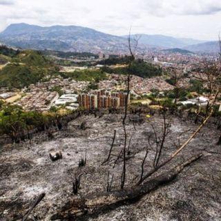 NUESTRO OXÍGENO Incendios - Freddy Adalberto Martínez