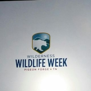 Pigeon Forge TN Wilderness Wildlife Week