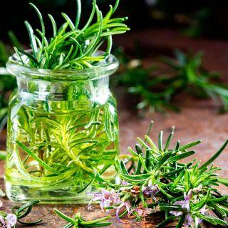 Plantas Medicinales de Cuba y México