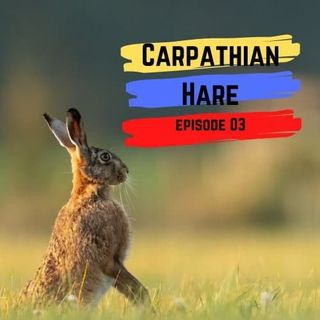 E3: Carpathian Hare (Latin and Greek)