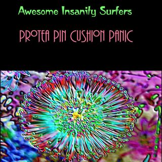 Protea Pin Cushion Panic