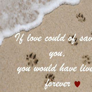 Pet Loss/Grief By Joanne Hull