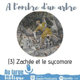 #174 A l'ombre d'un arbre (3) Zachée et le sycomore