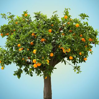 025 - Go for the low hanging fruit 08292017