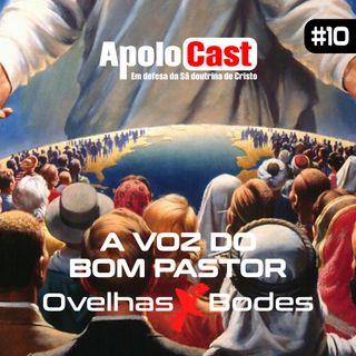 Apolocast #10: A voz do bom pastor - ovelhas vs bodes