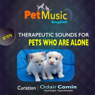 #09 Therapeutic Sounds for Pets who are Alone | PetMusic