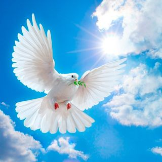 Dónde encontrar la paz