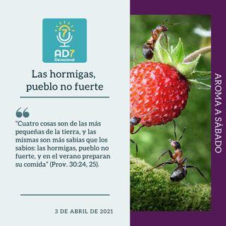 3 de abril - Las hormigas, pueblo no fuerte - Devocional de Jóvenes - Etiquetas Para Reflexionar