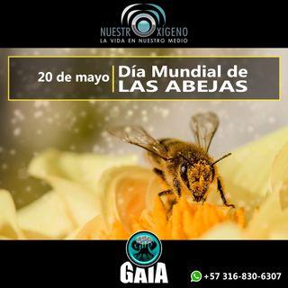 NUESTRO OXÍGENO 20 de mayo Día Mundial de las Abejas - Oswaldo Rojas