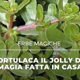 ERBE MAGICHE La Portulaca il Jolly della magia fatta in casa