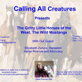 The Gritty Little Horses of the West - The Wild Mustangs