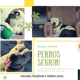 Perros Senior