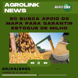 Abastecimento de milho em Santa Catarina, geada no Sul e crédito agrícola