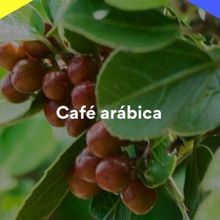 13/10/2021 - Cenário do café arábica