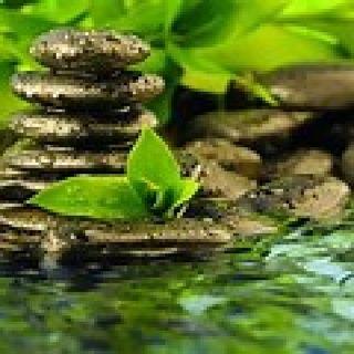 Episode 27 - Grounding Meditation