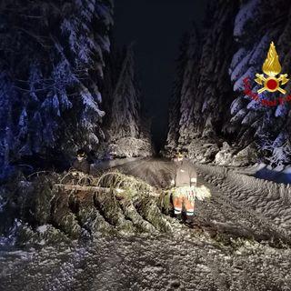 Strada della Fratellanza coperta di neve e abeti, intervento notturno dei vigili del fuoco