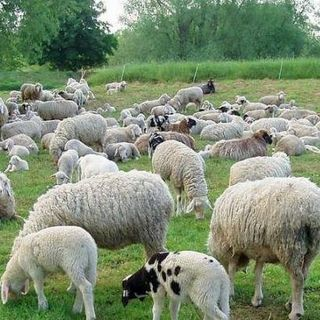 I pastori Sardi