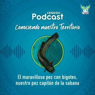 El maravilloso pez con bigotes, único en el mundo, que vive en Colombia