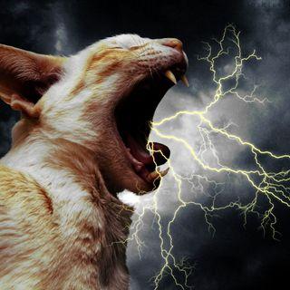 The Kitten Kong Radio Show 732: Lightning Strikes.