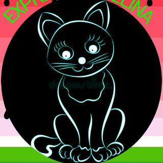 CAT CAST EXPRESSÃO FELINA