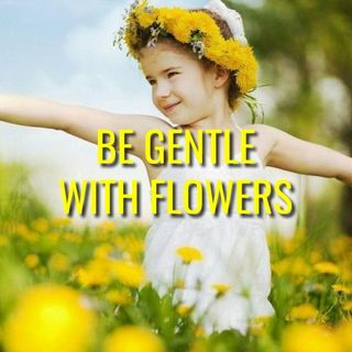 Be Gentle With Flowers - Morning Manna #3077