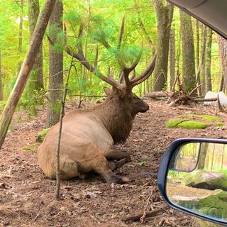A Mendon zoo offers socially distanced car tours of the 200 acre zoo