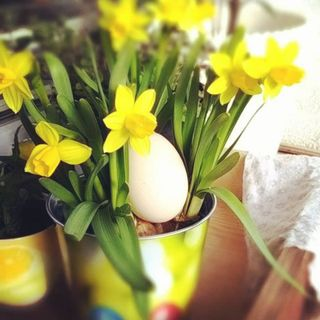 jajko ach jajko i inne ważne sprawy - Miłka Malzahn