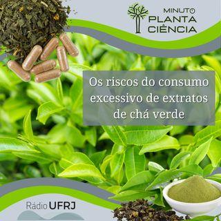 Minuto PlantaCiência - Ep. 10 - Os riscos do consumo excessivo de extratos de chá verde (Rádio UFRJ)