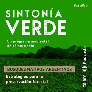Bosques nativos argentinos – Estrategias para la preservación forestal