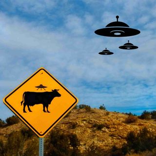 Bizarre Cattle Mutilations Are Still Happening After Many Decades -- What Is This All About?