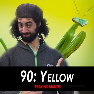 90 - Yellow the Praying Mantis