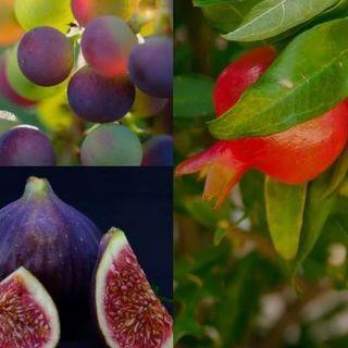 Sukkot (Feast of Tabernacles) 2019 - Rejoicing in New Beginnings