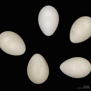 BacterioFiles 213 - Bird Bacteria Bolster Babies