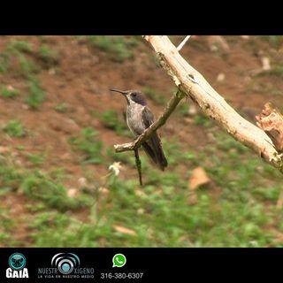 NUESTRO OXÍGENO Conservación y funcionalidades de las aves - Natalia Ruiz Giraldo