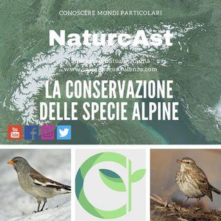 La conservazione delle specie alpine